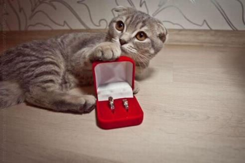 will-you-marry-me-cat-graphic